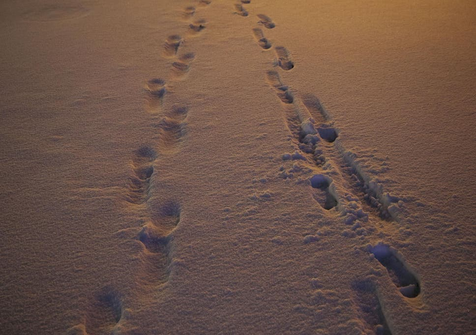thieves arrested after leaving trail of footprints in snow the