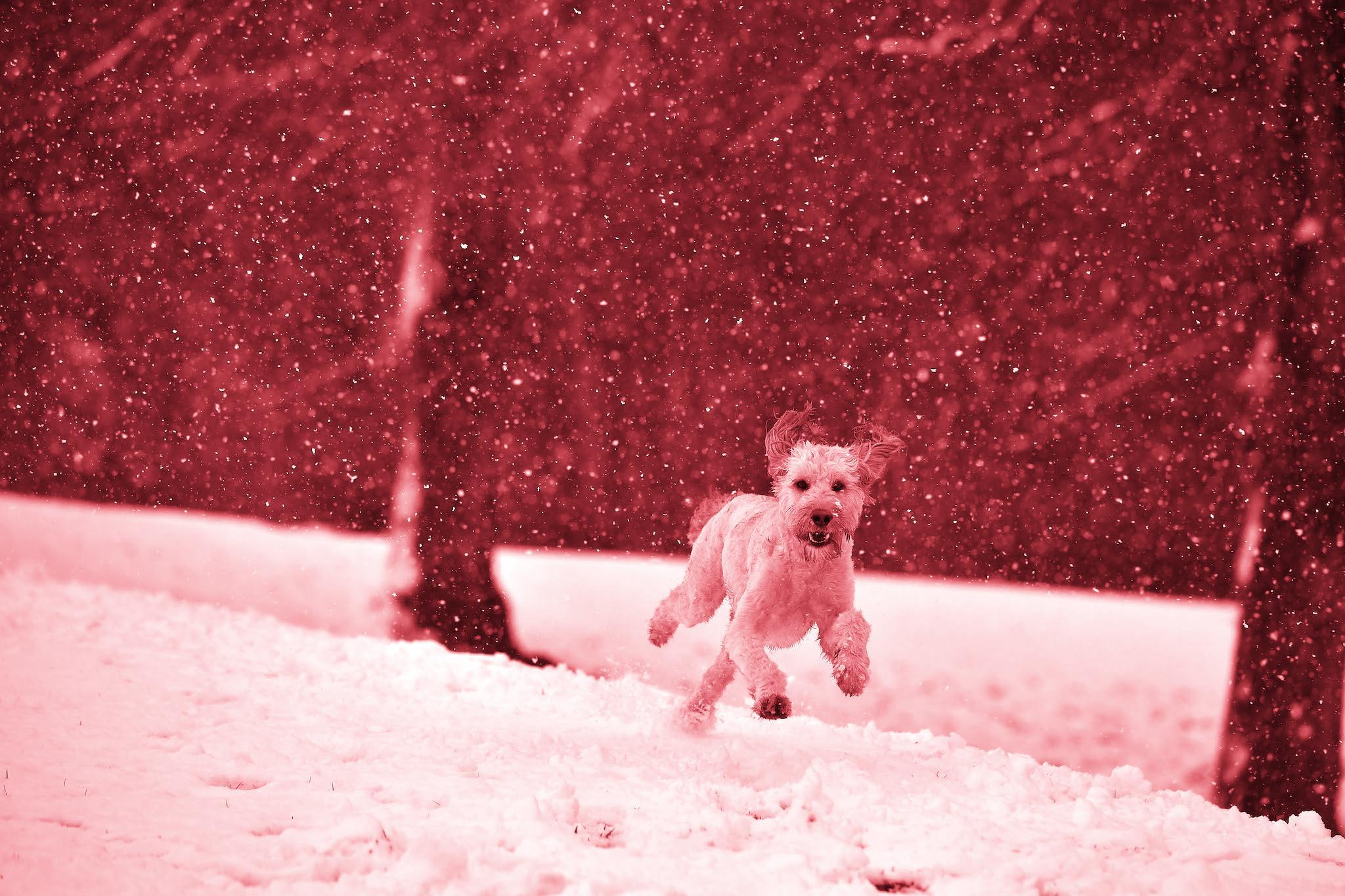 National Grid Latest News Breaking Stories And Comment The Snow Dog Hd Wiring Harness Home