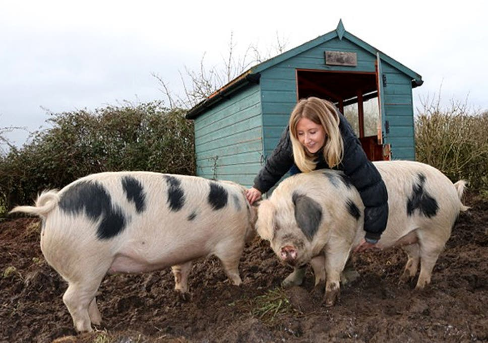 The three little pigs that were hand-reared to be eaten | The