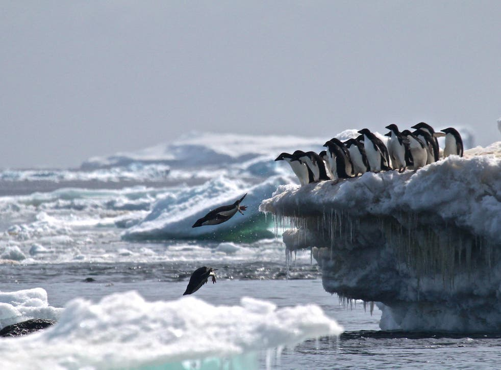 Adélie penguins in the Danger Islands, Antarctica