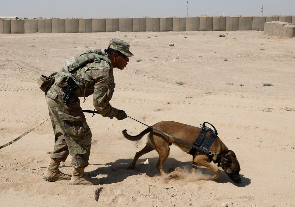 Image result for army sniffer dogs