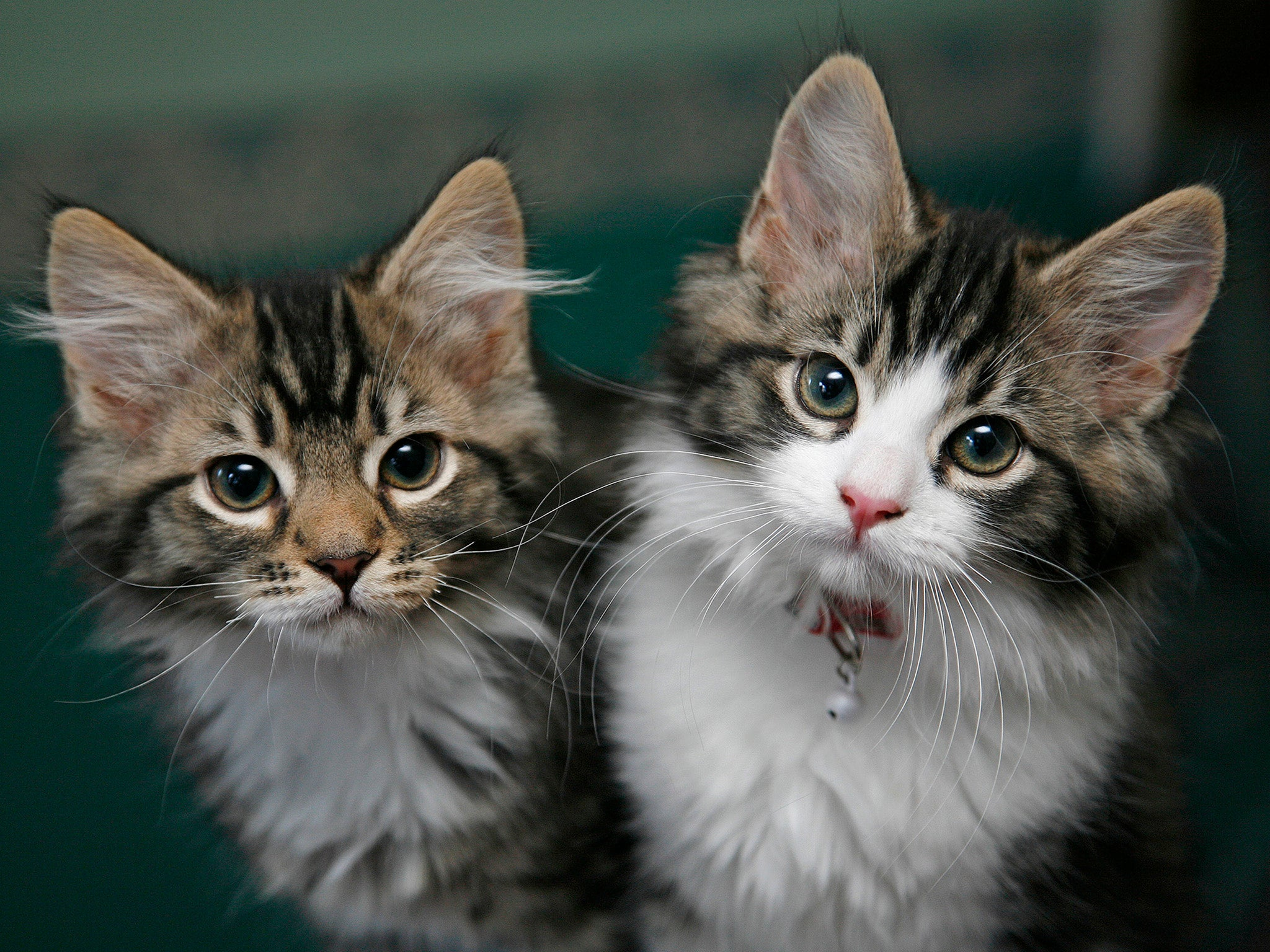 US Government 'killed Thousands Of Kittens' As Part Of
