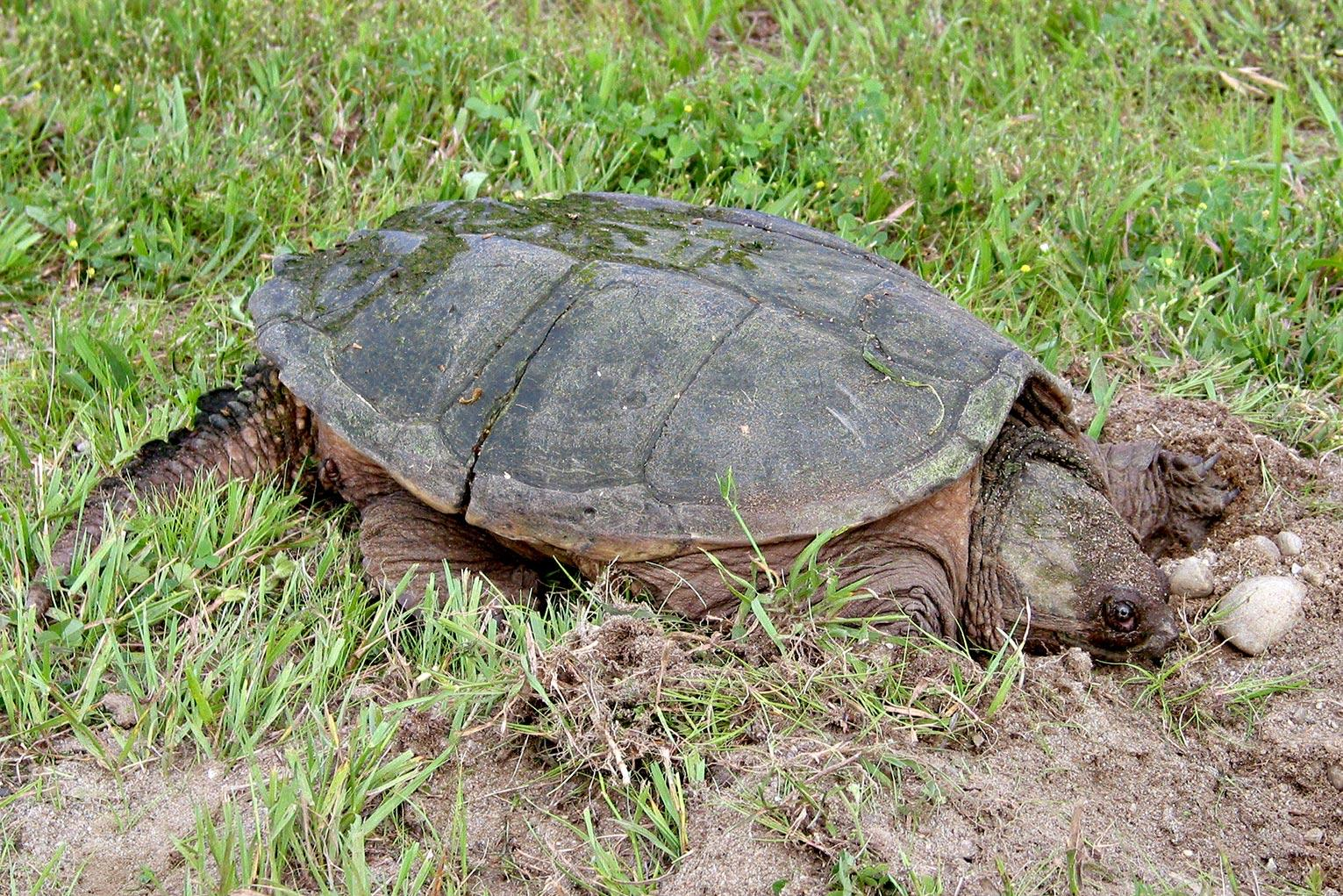 Science teacher 'feeds puppy to turtle' in front of students