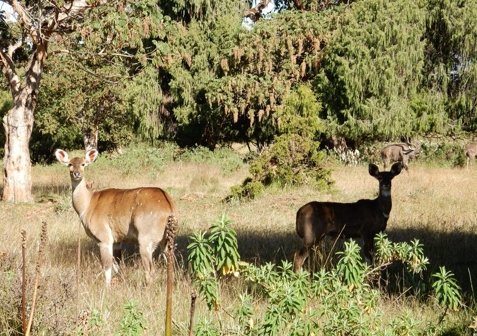Inside Bale Mountains Park, Ethiopia's nature reserve where