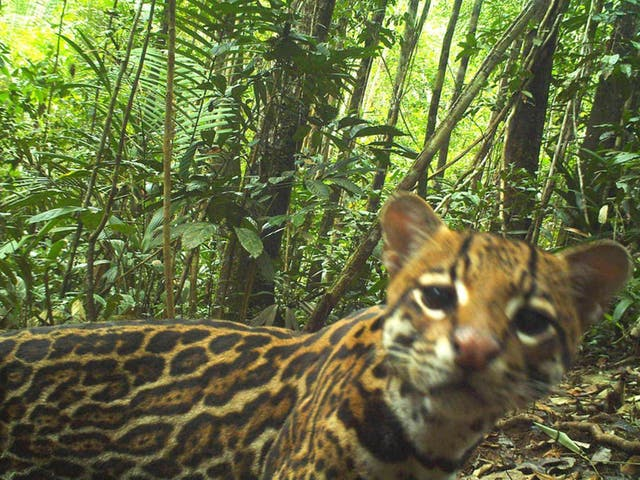 Cameras set up next to fields captured more than 60,000 photographs and detected over 30 species