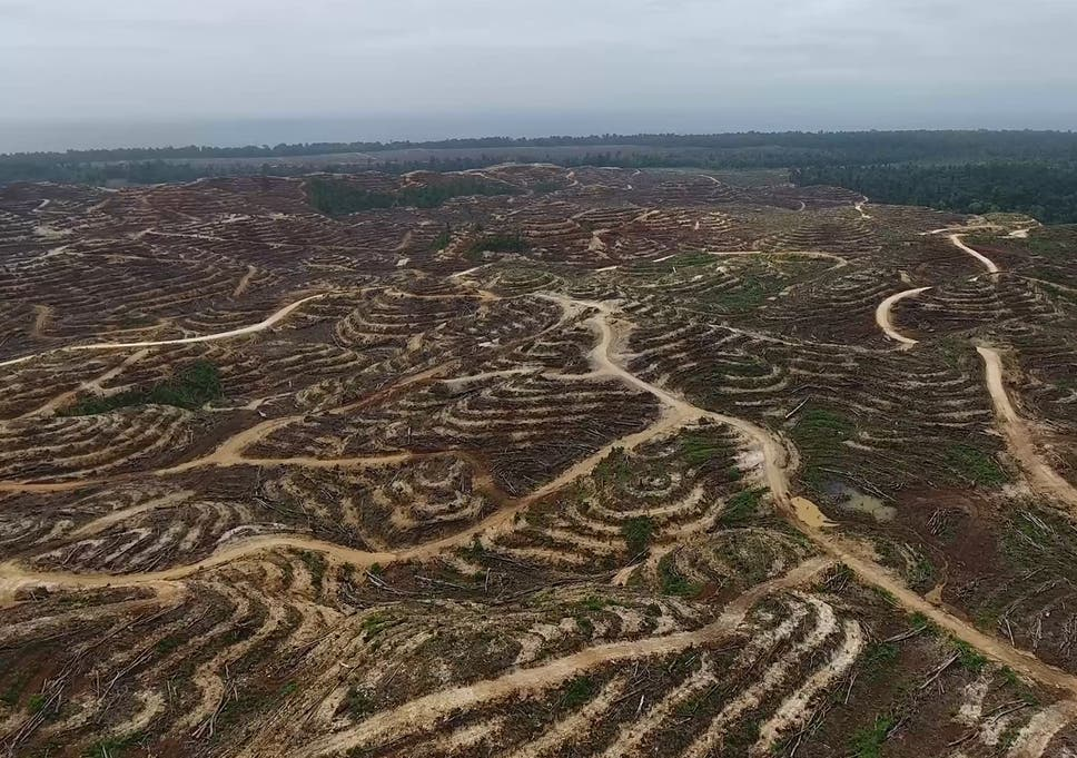 Drone footage reveals the extent of forest destruction in Papua New Guinea
