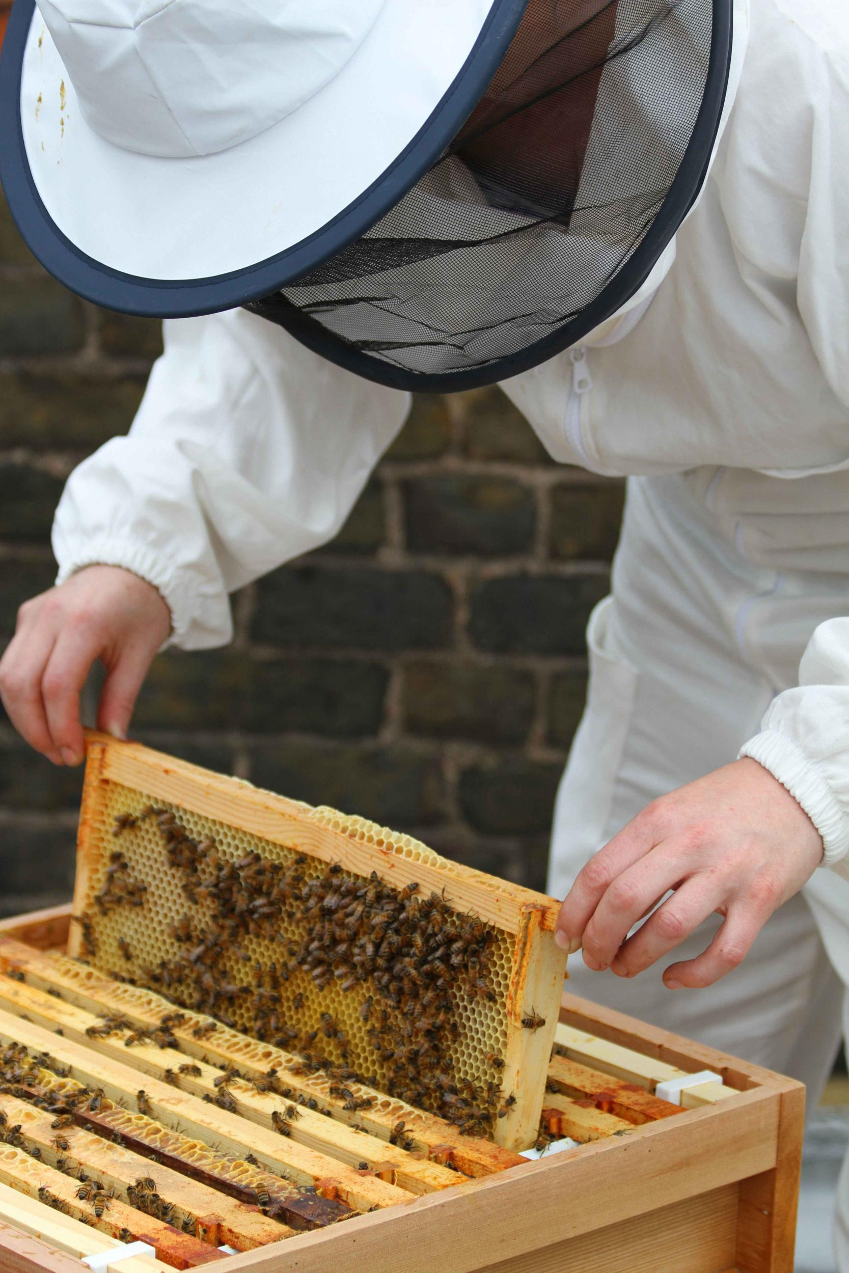 Beekeeping for beginners: where to start Basic tips 66