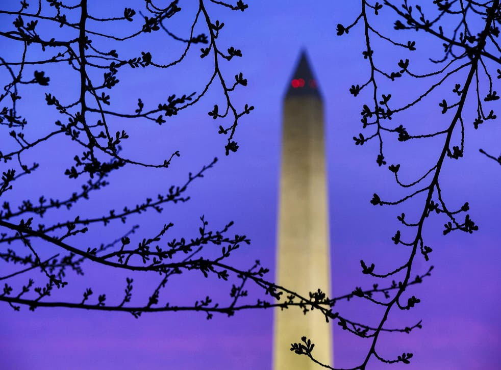 Cherry tree buds are silhouetted against morning sky near the Washington Monument on 27 March, 2018
