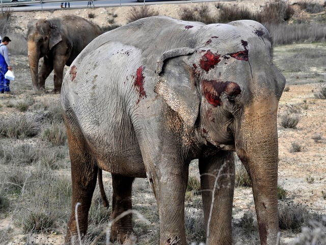 Two of the elephants suffered injuries to their faces, trunks and legs