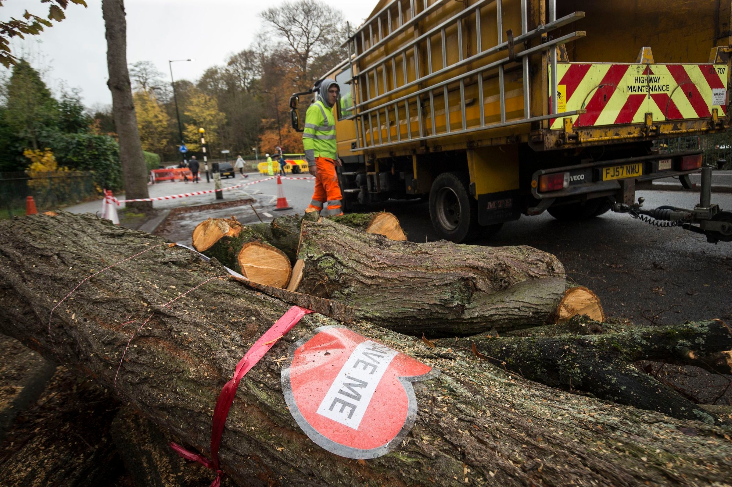 Sheffield's tree massacre: How locals battled to protect