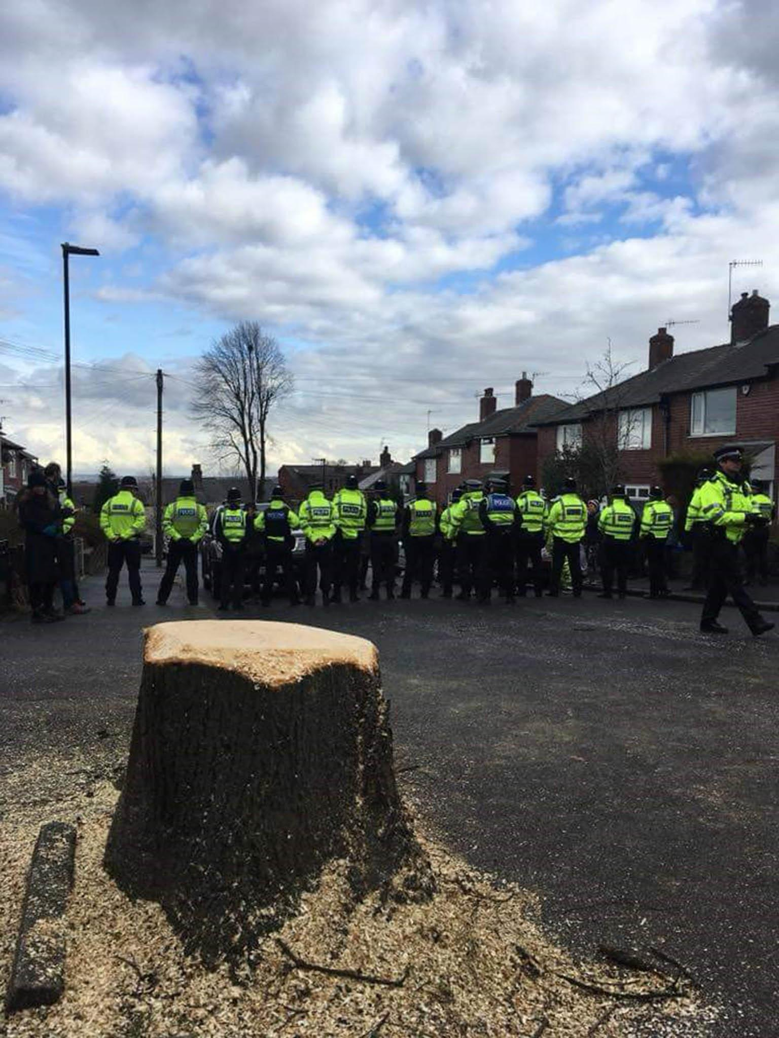 Sheffield's tree massacre: How locals battled to protect Europe's