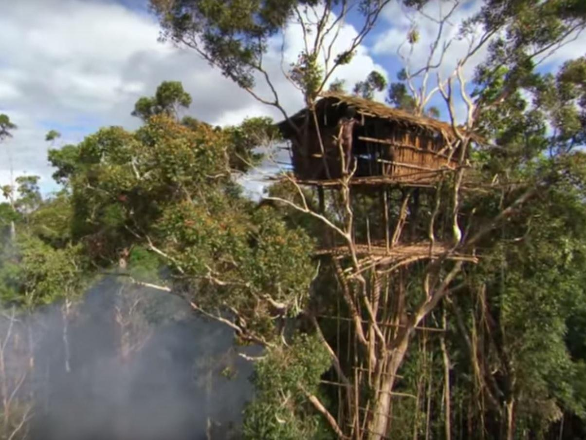 BBC admits scenes in Human Planet which showed tribe living in rainforest treehouse were faked