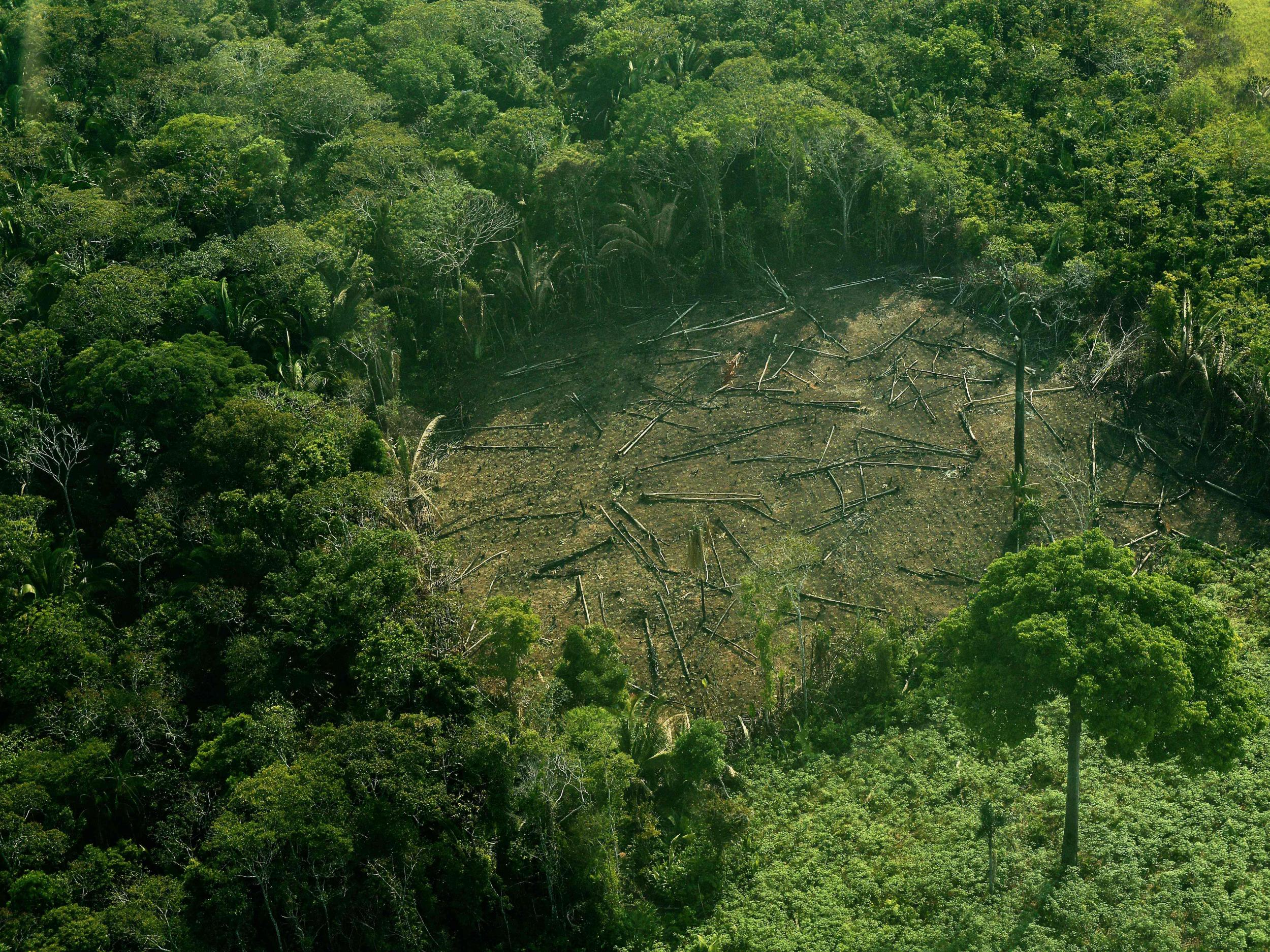 tragedy of deforestation This paper provided an economic analysis of deforestation in nigeria notably, it discussed the nature and degree of deforestation in nigeria, evaluation of forest.