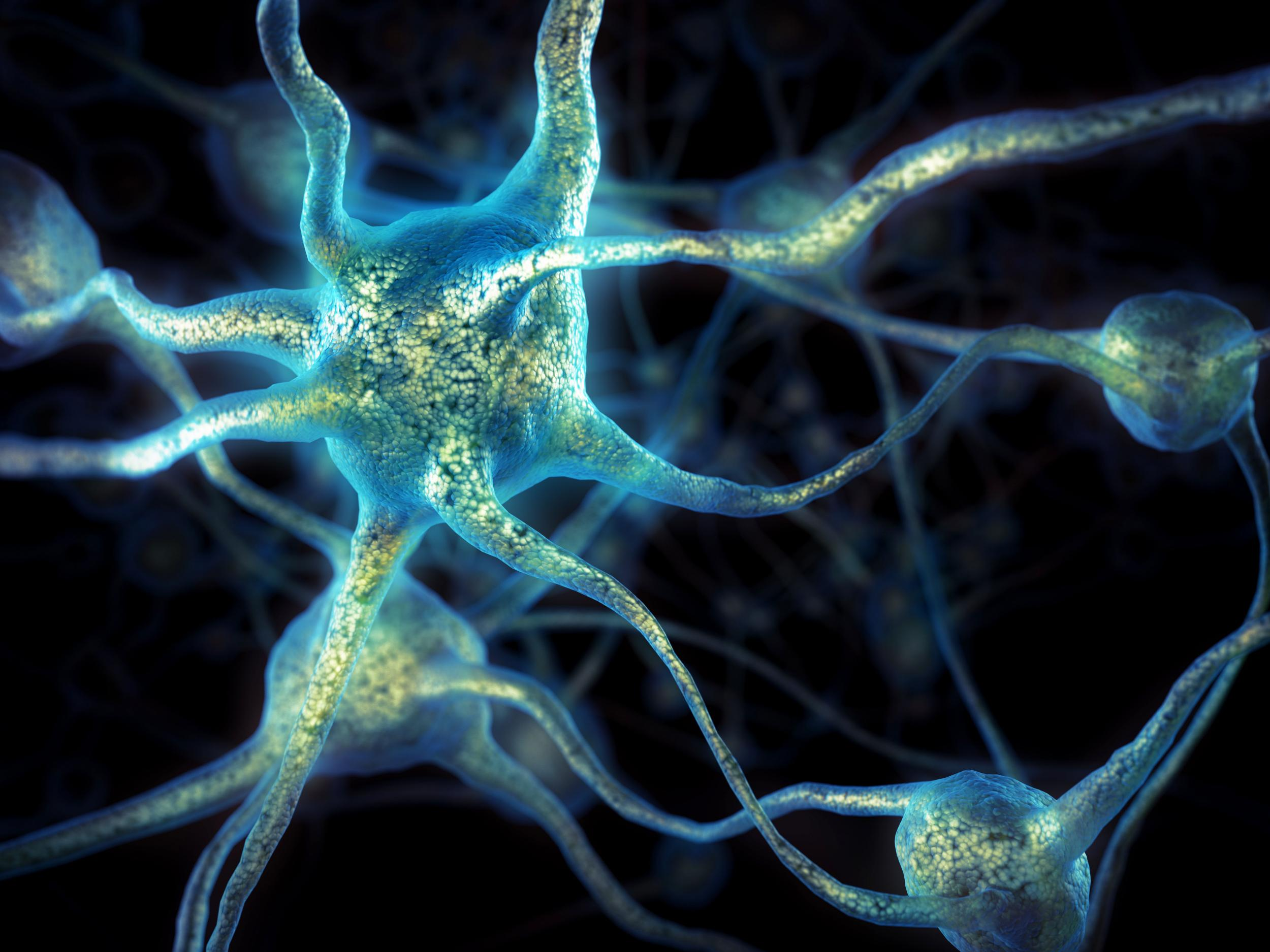Elderly people grow as many new brain cells as young, study finds | The  Independent