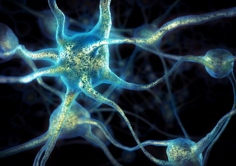 Elderly People Grow As Many New Brain Cells As Young Study Finds