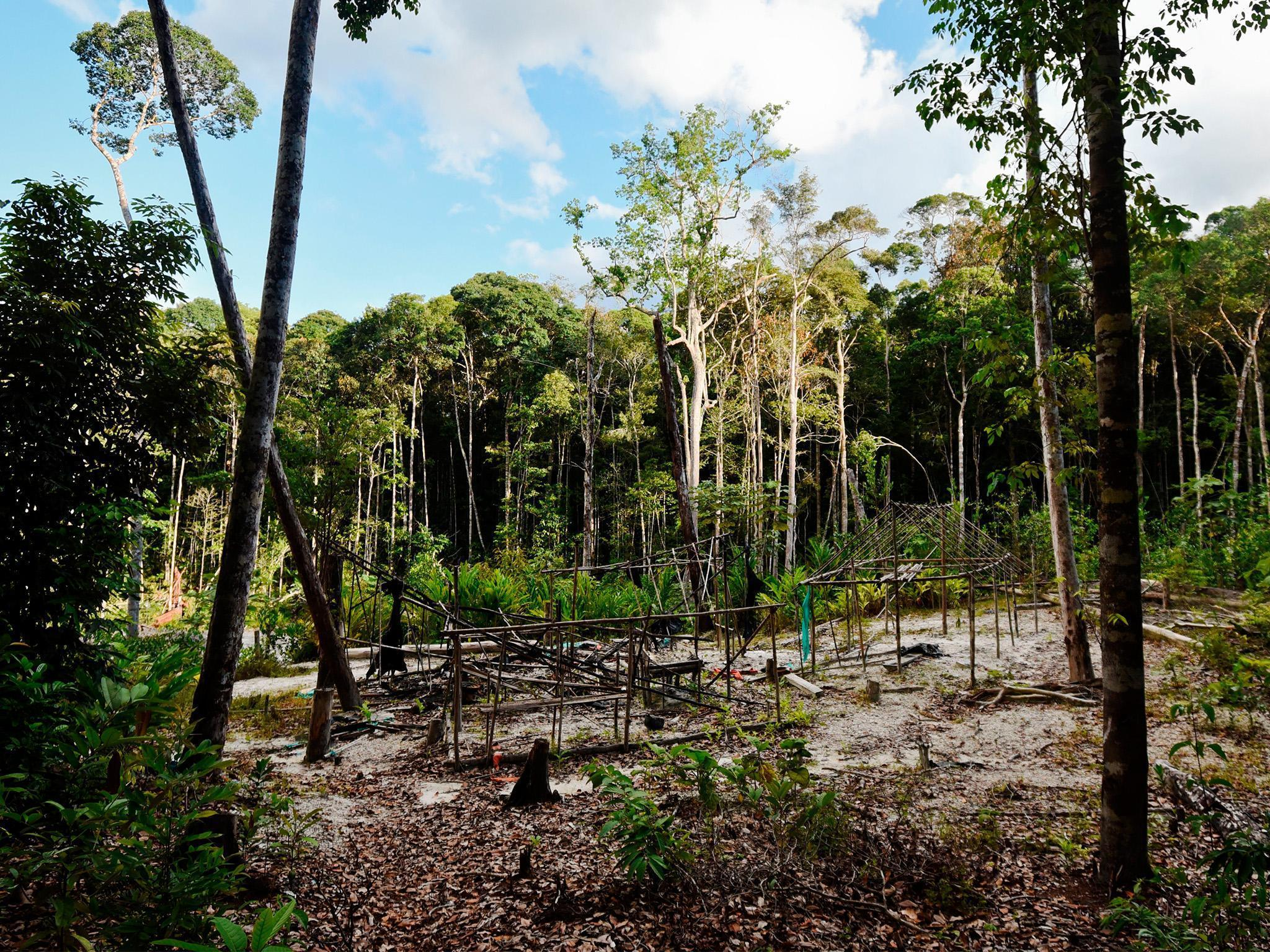 rainforest latest news breaking stories and comment the independent