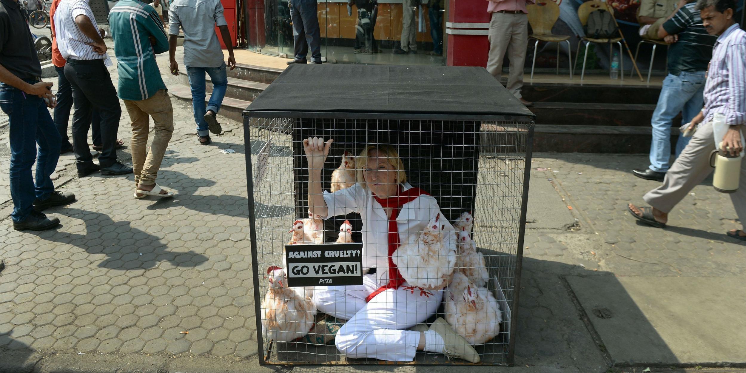 animal cruelty articles