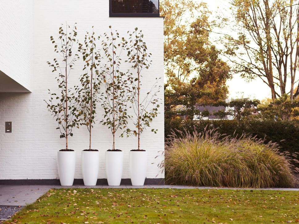 10 best planters | The Independent Zinc Planters Argos Html on
