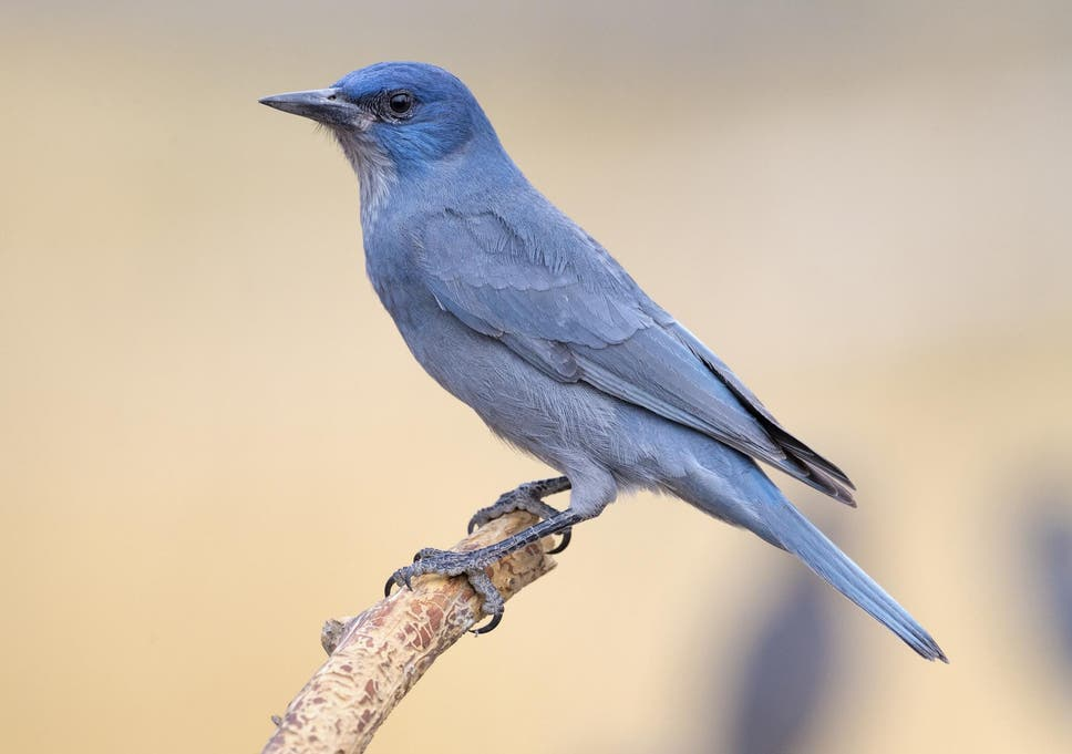 Love Hormone Identified In Birds That Makes Them More