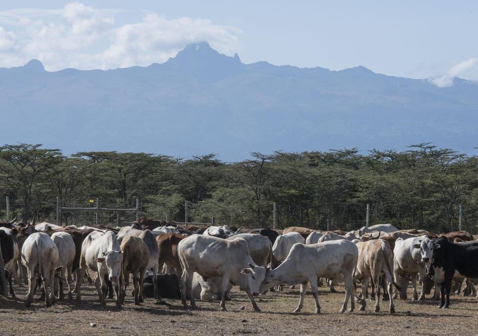 cattle fodder crossword