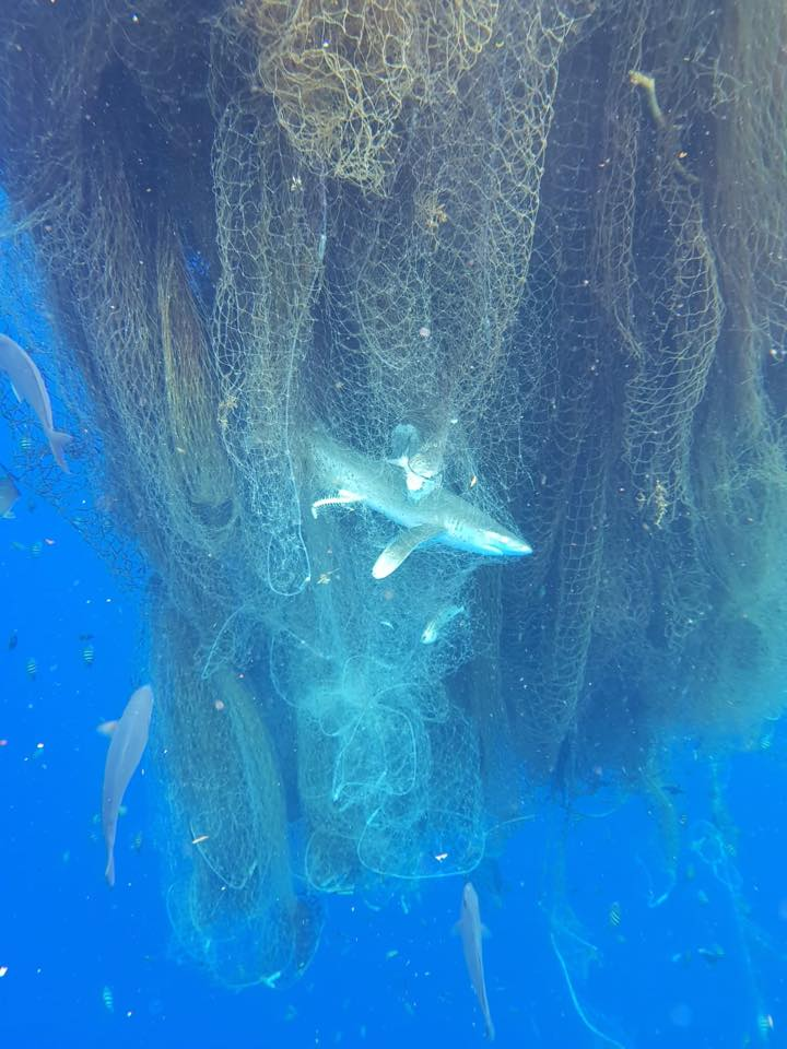 Hundreds of sharks and other fish discovered tangled in 'ghost net