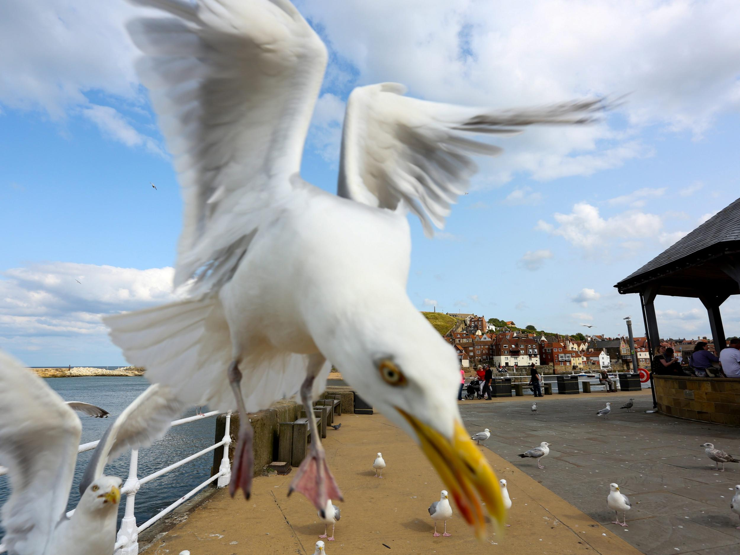 Man repeatedly kicked and stamped on seagull after it tried to steal his chip, prompting RSPCA appeal