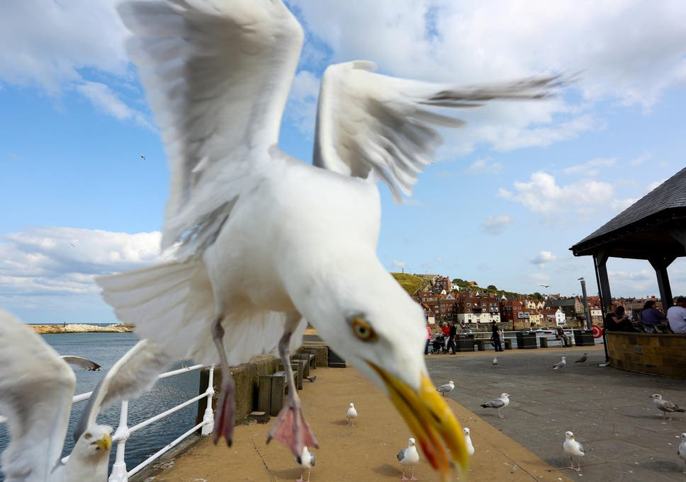 Man repeatedly kicked and stamped on seagull after it tried
