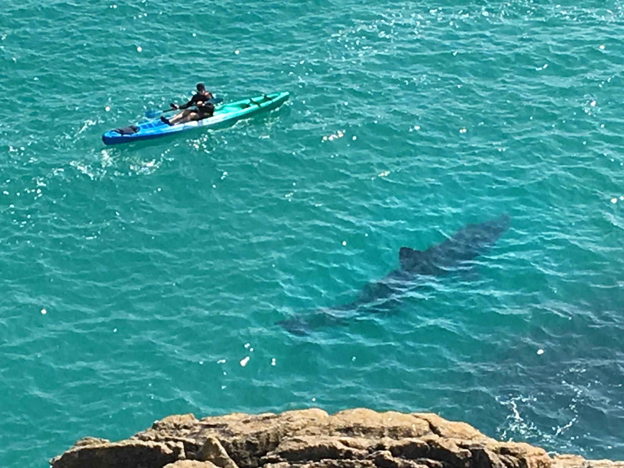 Close encounter between shark and kayaker seen off Cornish