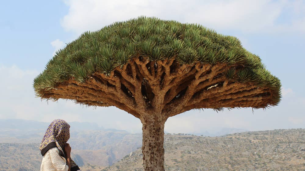 Socotra Island The Unesco Protected Jewel Of Arabia Vanishing