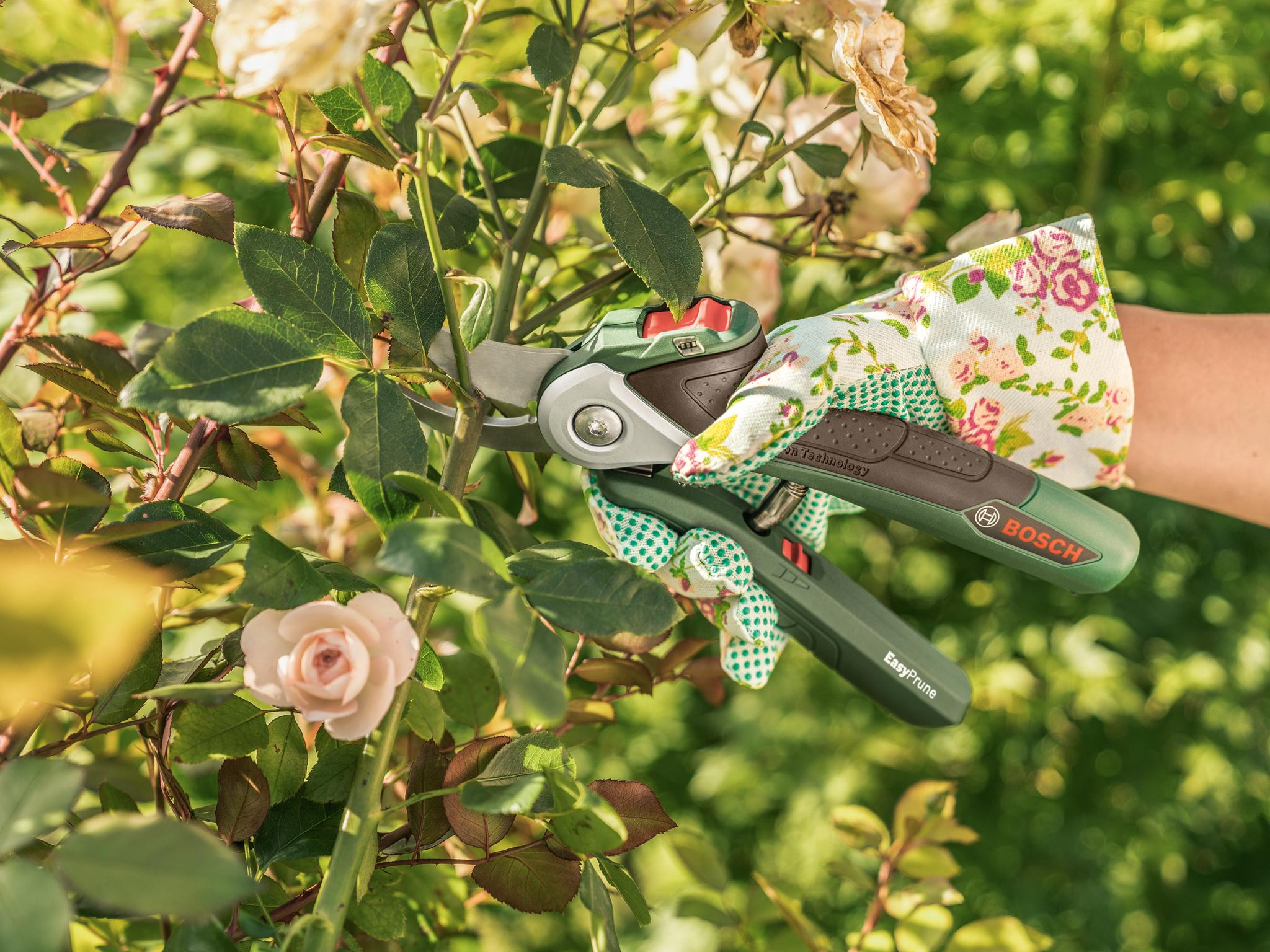10 Best Pruning Tools The Independent