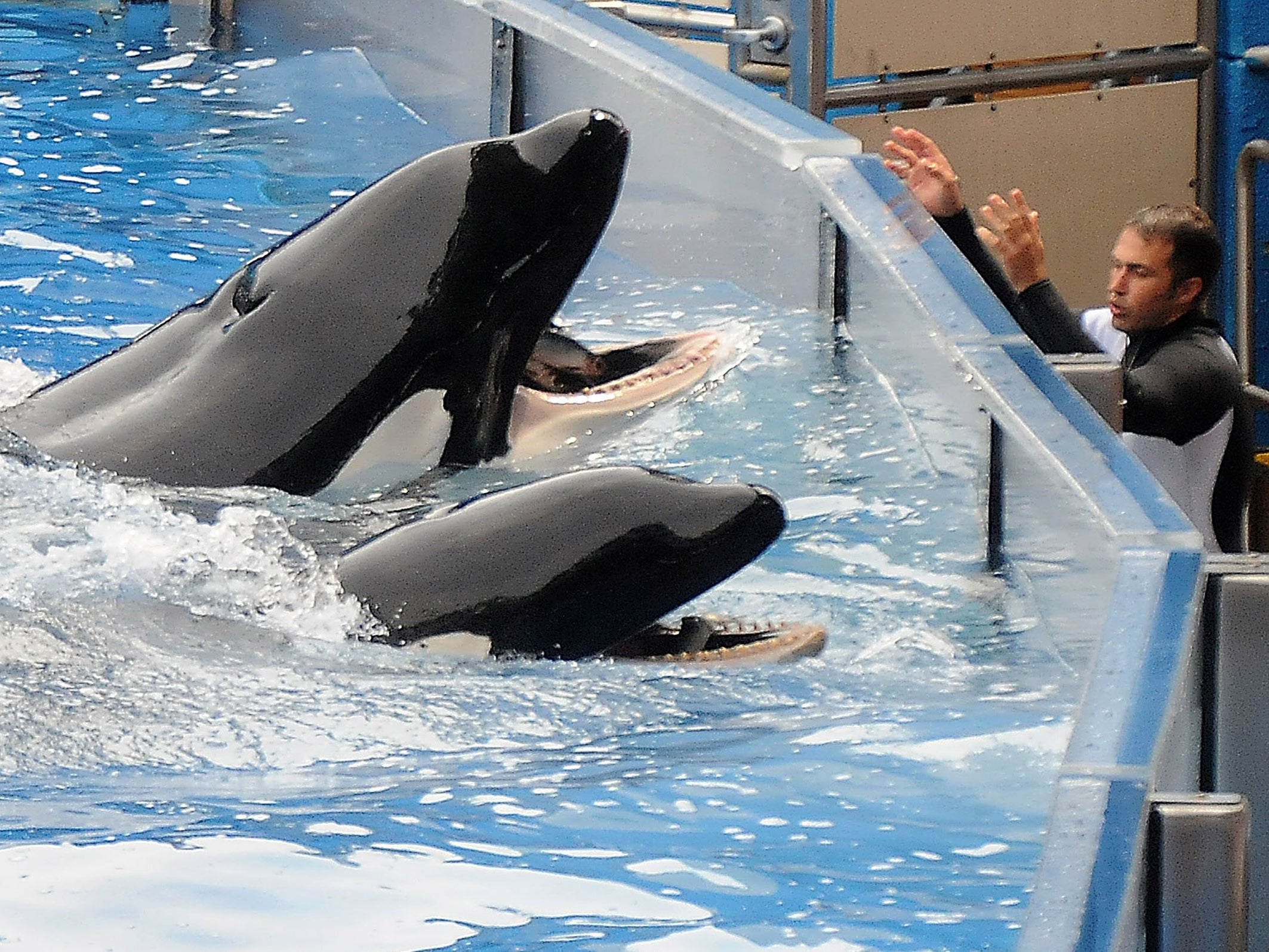 Thomas Cook to stop selling SeaWorld tickets if park doesn't improve after animal-welfare inspection