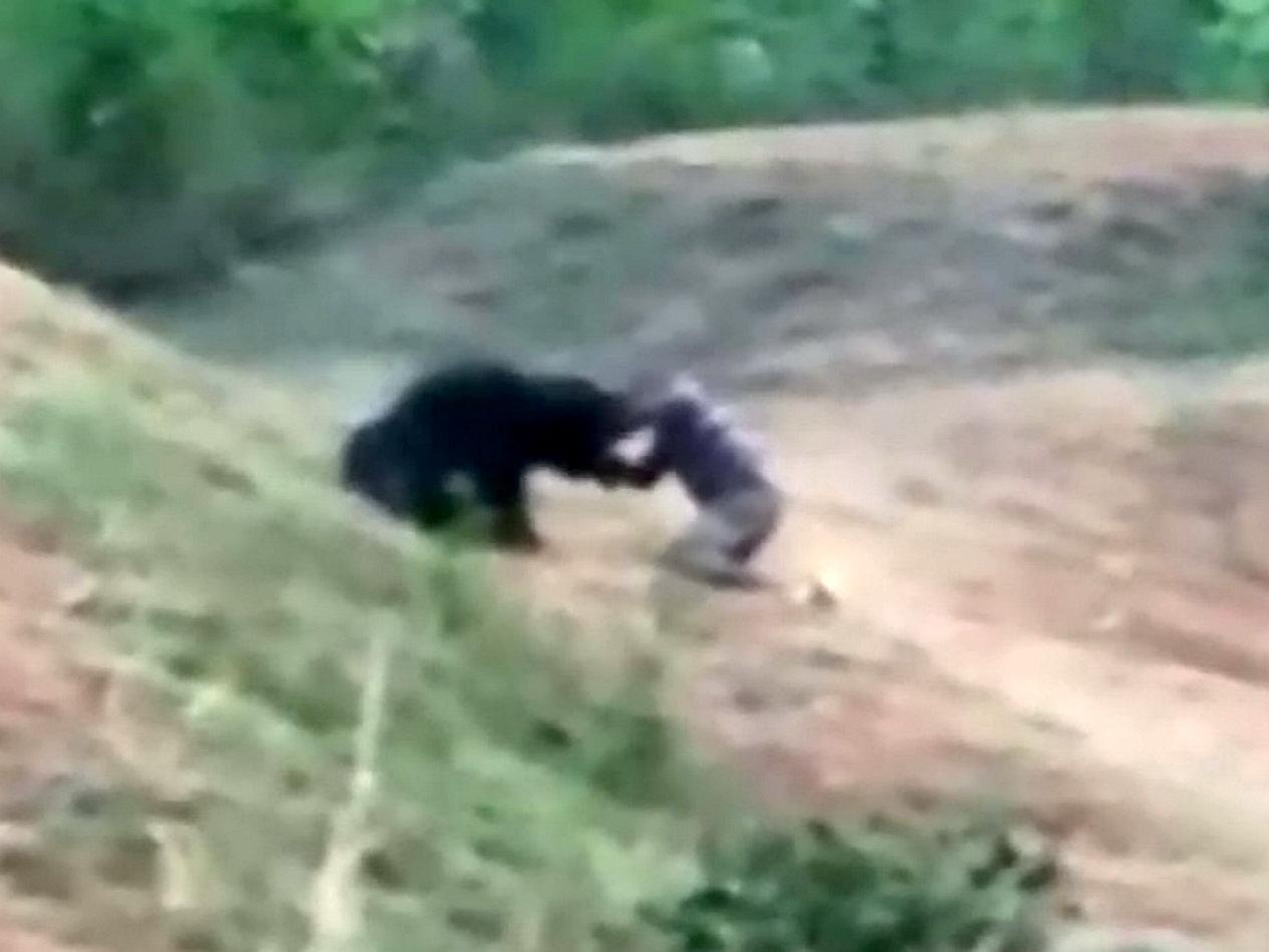 Man 'trying to take selfie' dies after being mauled by bear | The
