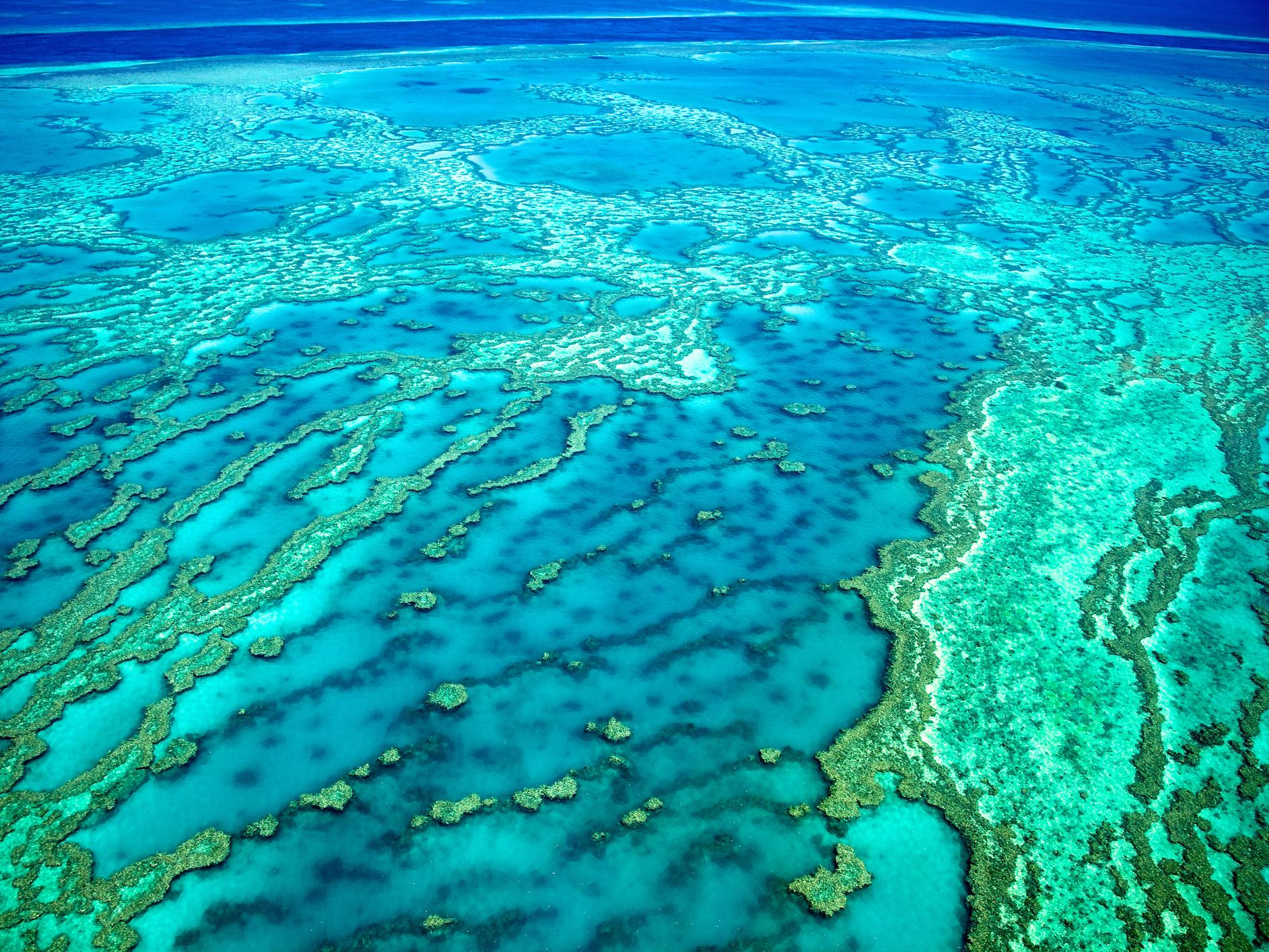 Destruction of native Australian forest approved despite threat posed to neighbouring Great Barrier Reef