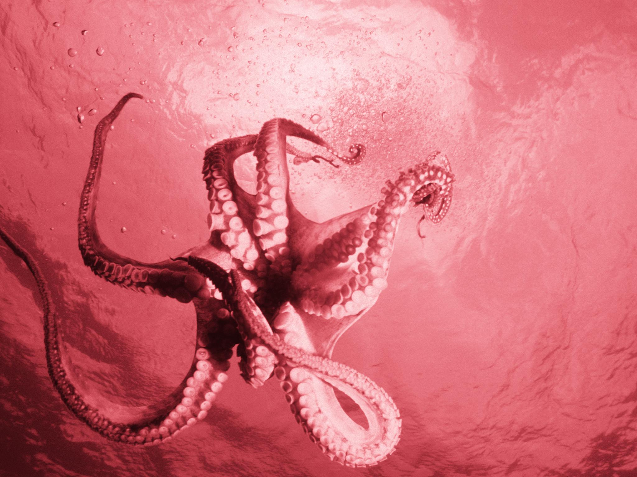 Are octopuses aliens from outer space that were brought to Earth by