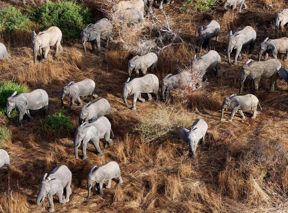 Made up of more than 500 animals, the Zakouma herd is one of the largest surviving in Central Africa
