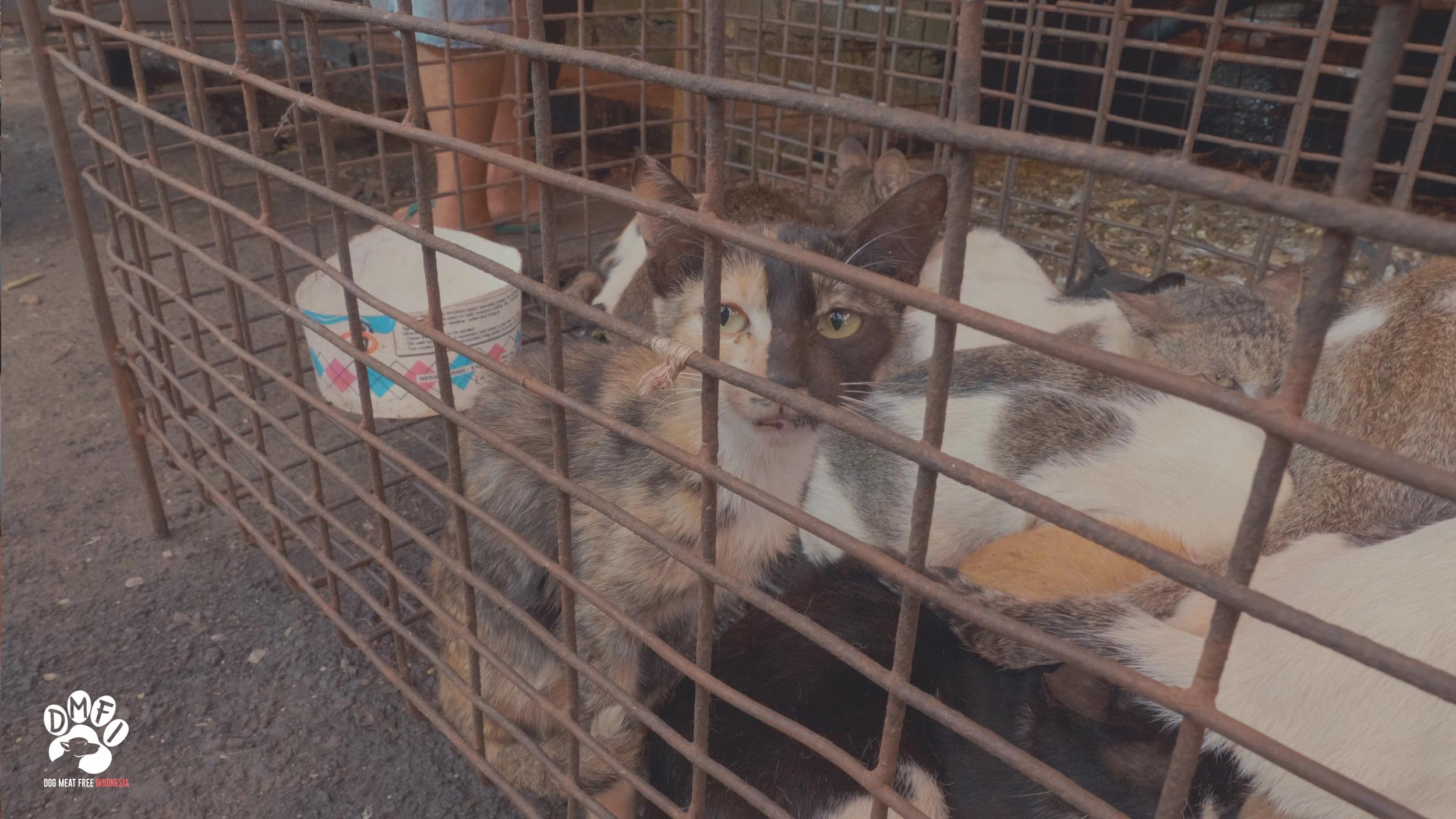 Dogs and cats blowtorched alive and bludgeoned to death at