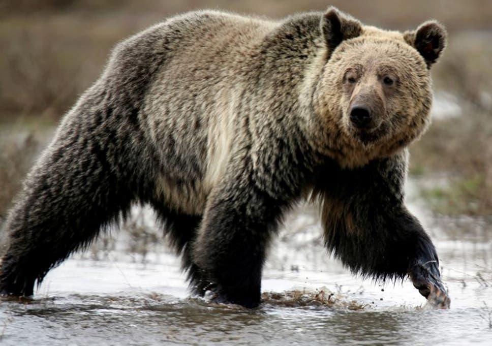 Trump to repeal Obama-era rule banning 'inhumane' hunting