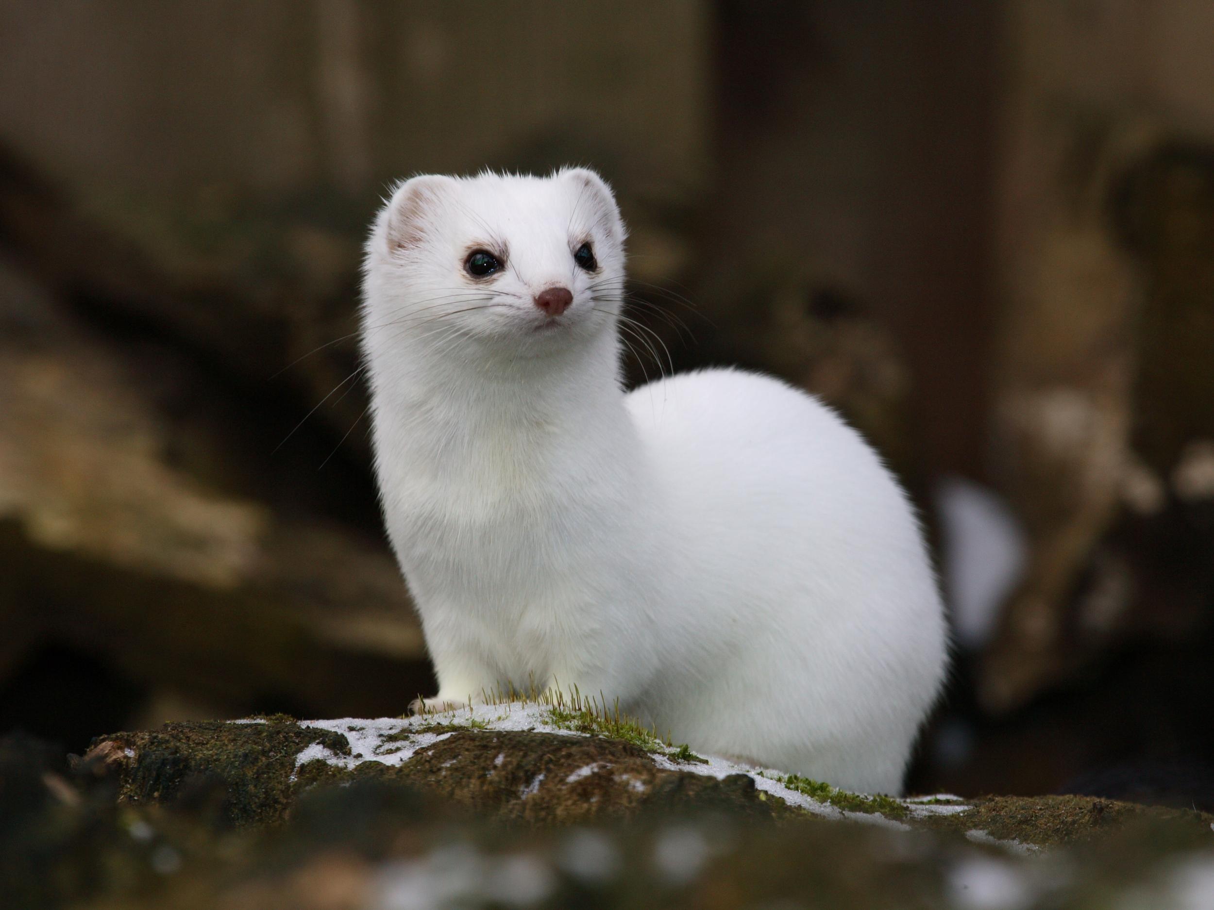 Ruder- & Paddelboote Weasel