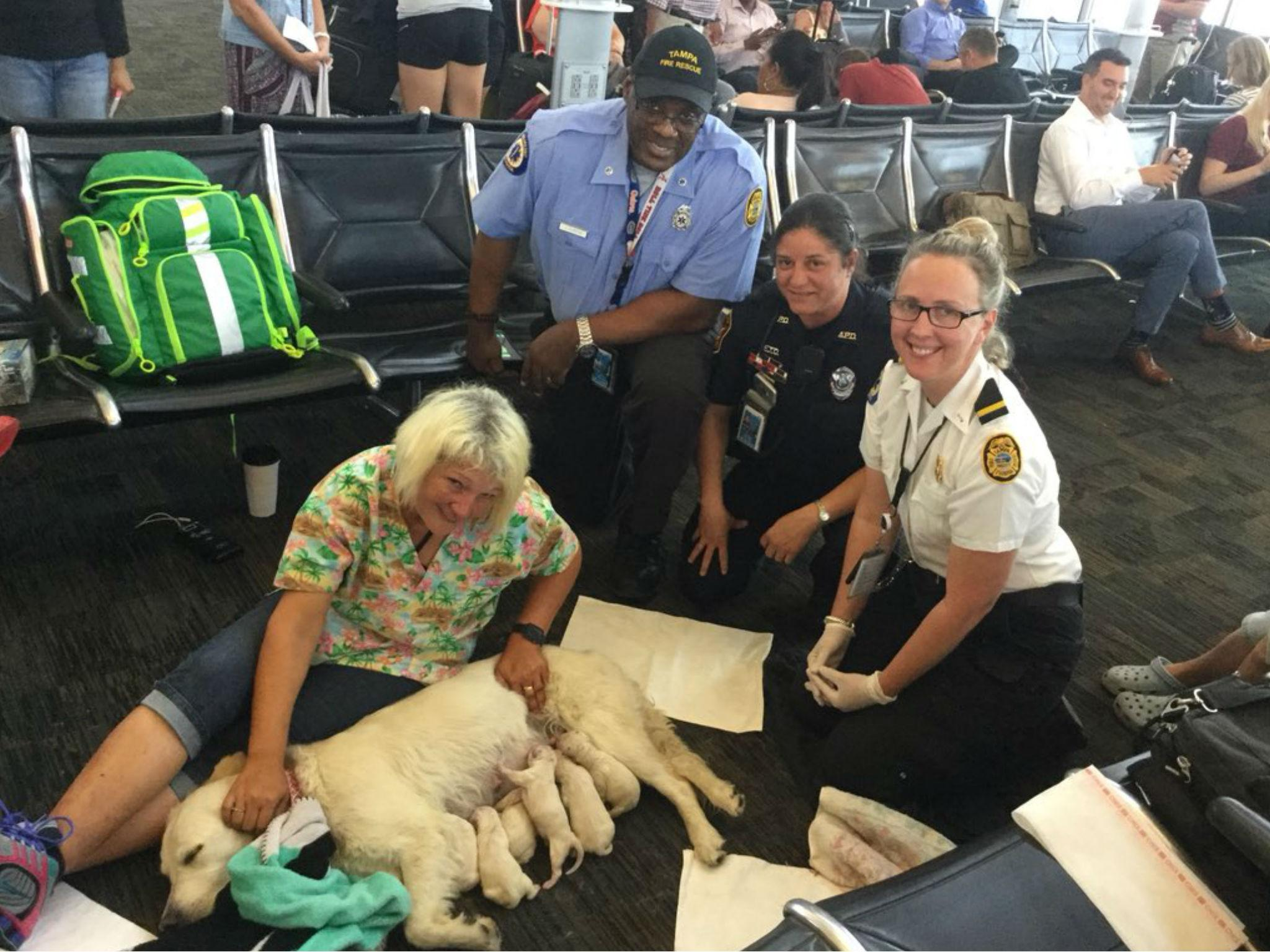 Service dog gives birth to eight airport puppies in Tampa, Florida