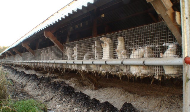 Polish fur farm