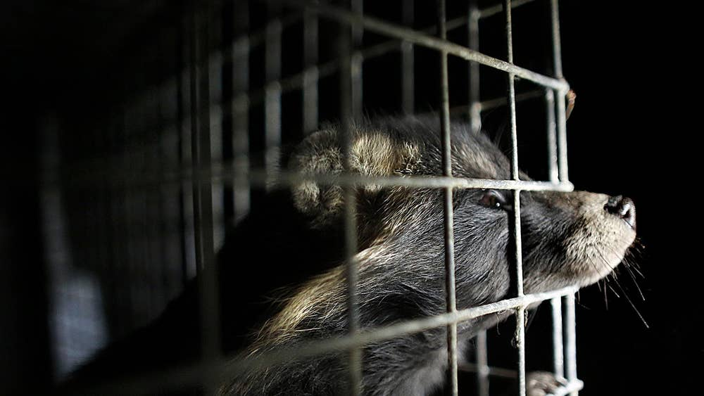 8aa8510cfbbf Every fashion brand that has banned fur: From Chanel to Burberry ...