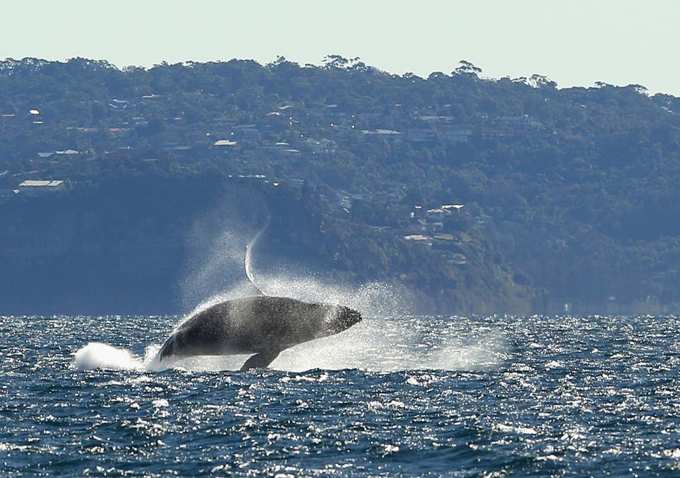 Whales and seabirds at risk from deadly plastic and nappies