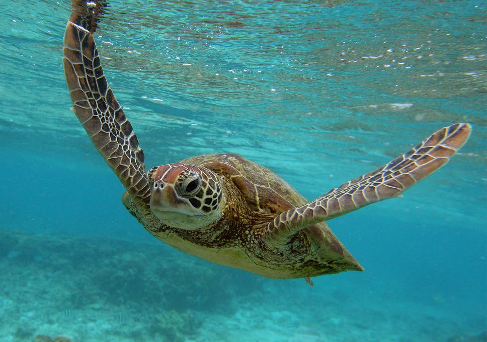 thousands of turtles killed each year by small scale fisheries