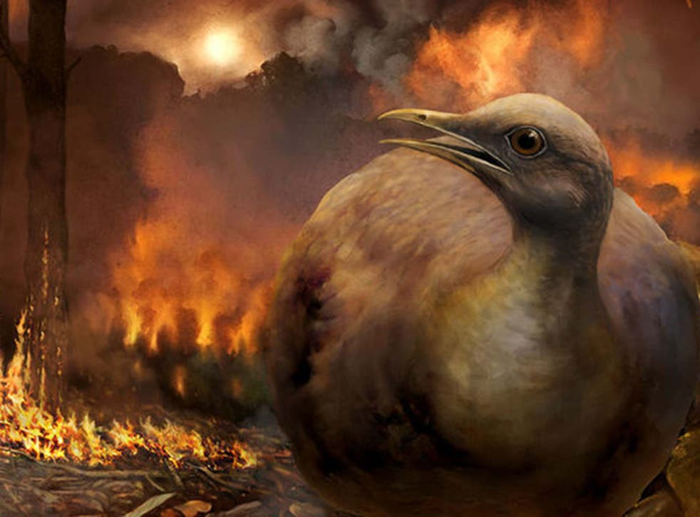 The ancestors of as few as five major bird lineages survived the apocalyptic event