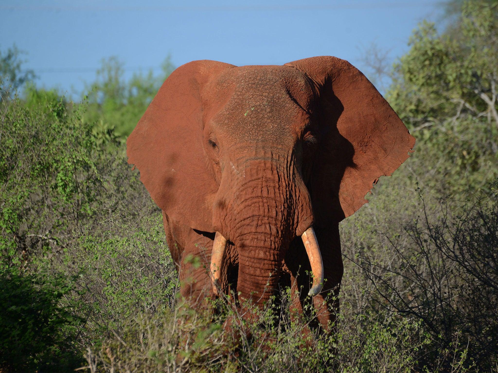 Elephant poachers shot dead by rangers at wildlife reserve in Kenya