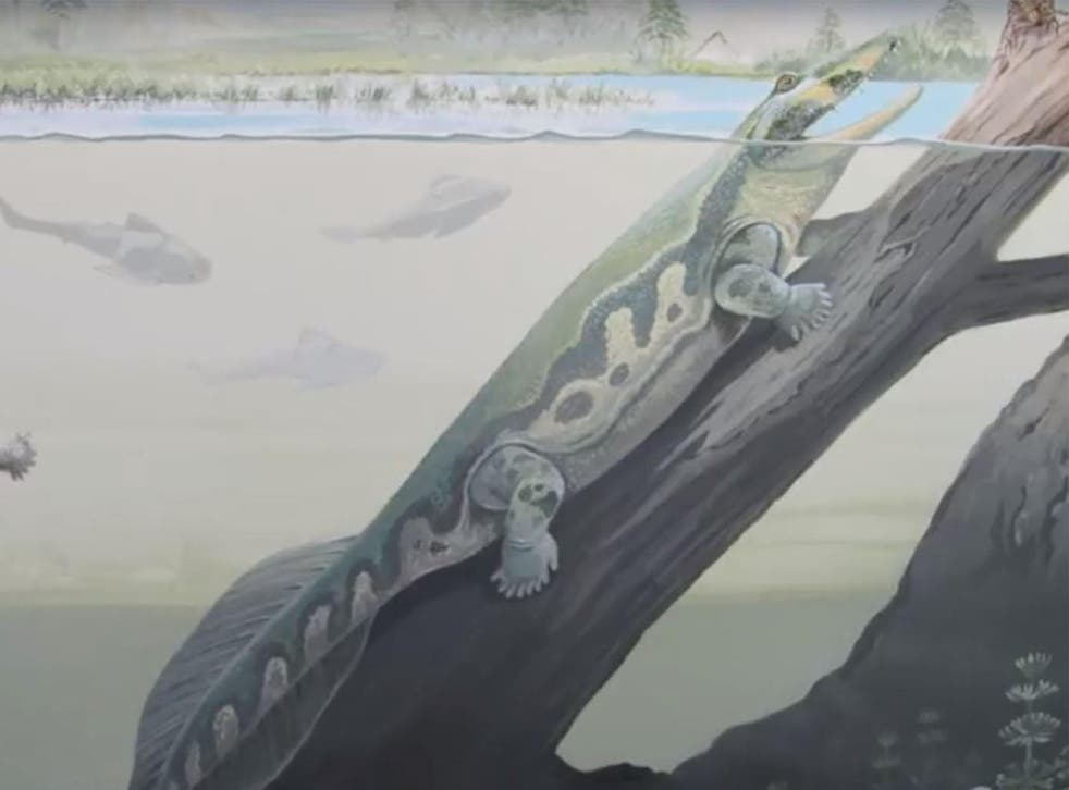 An artist's impression of Tutusius during the Devonian period 360 million years ago