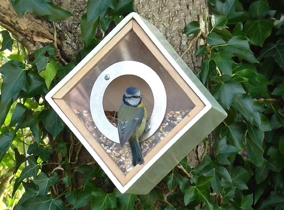 Simon King urban bird feeder squares the circle on feeding the feathered