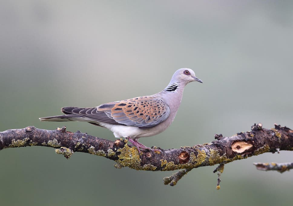 Garden bird seed linked with deaths of critically endangered british easy meals may be acting as an ecological trap tricking birds into choosing forumfinder Images