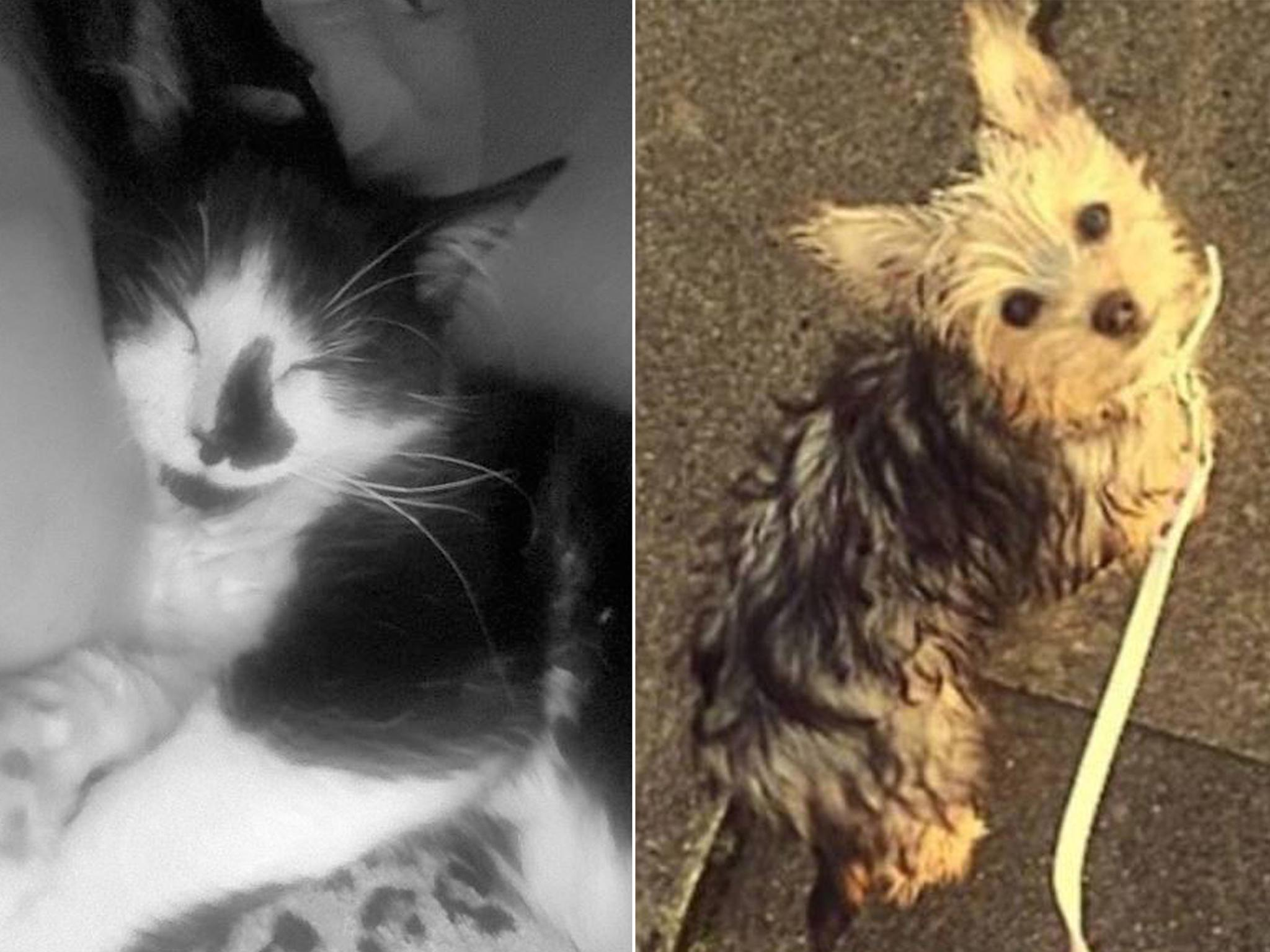 Family's pet cat and dog 'deliberately killed with poison-laced sausages'