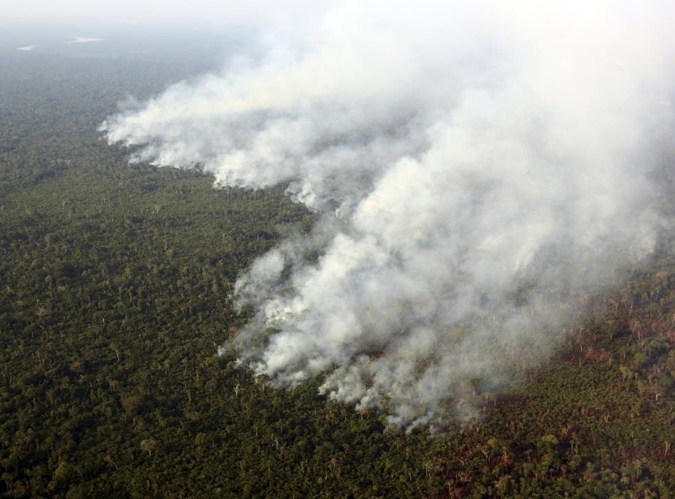 Smoke billows from a fire in the Amazon rainforest in Brazil. About 30 per cent of all tropical rainforest losses last year were in the country